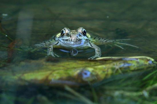 Coatesville, PA: The wetlands at ChesLen are teeming with life! Photo: John McNamara