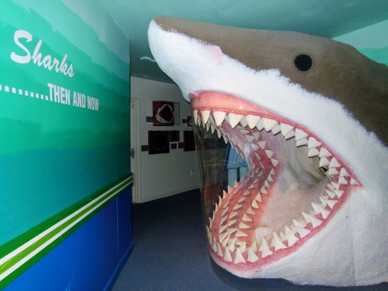 Aurora, นอร์ทแคโรไลนา: Learn about the C. megalodon, the State Fossil of North Carolina!