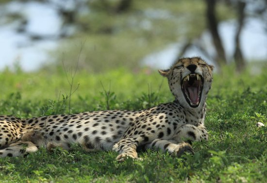 Maun, Botswana: Tarangire, Tanzania