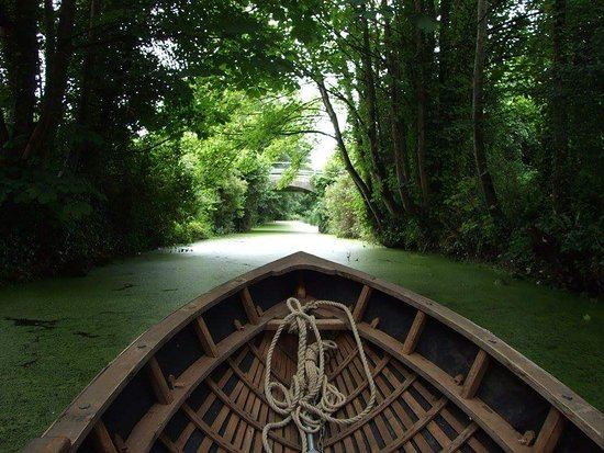 Drogheda, Ireland: Nature's green caerpet on the Boyne Canal