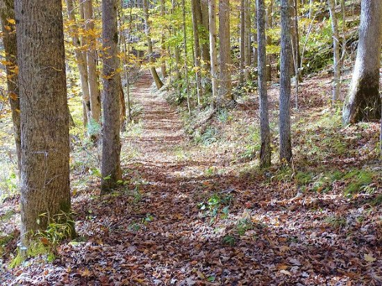 Camp Creek, Virginia Occidental: bear wallow trail