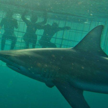 Scottburgh, Sør-Afrika: photo0.jpg