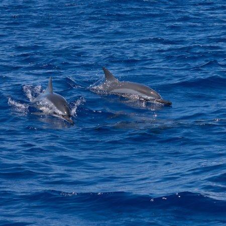 Saint-Gilles-Les-Bains, Reunion Adası: photo1.jpg