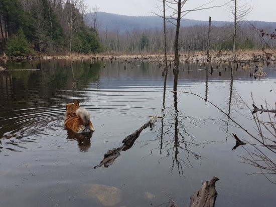 Shefford, Canada: Le marais/ étang