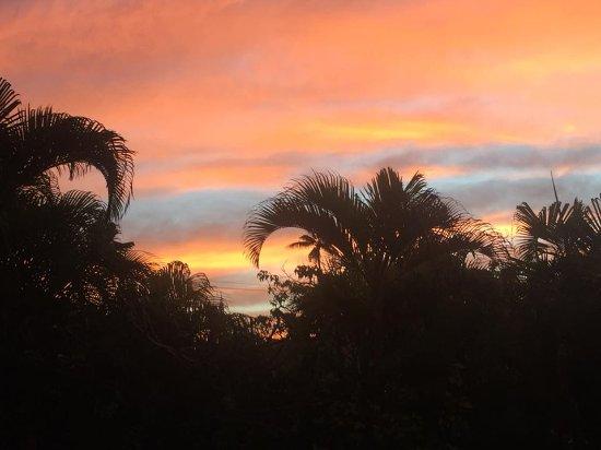 Papaya Paradise Bed and Breakfast: Sunrise from the backyard.