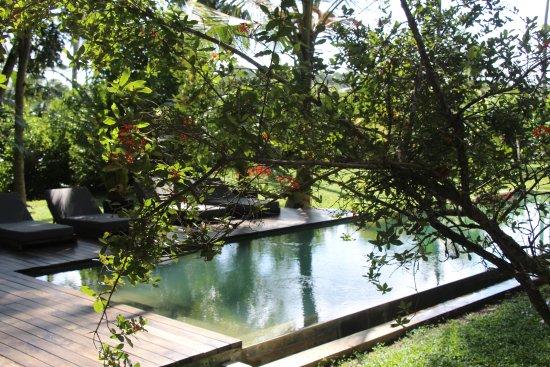 Salt water swimming pool. - Picture of Kaju Green, Unawatuna ...