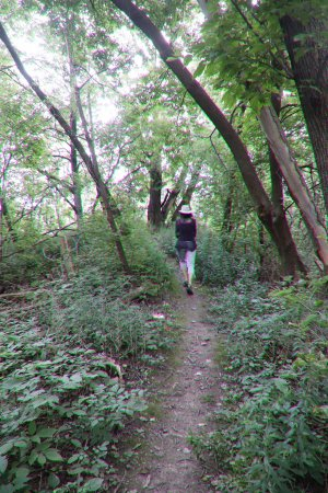 St. Catharines, Canada: The path in the forest