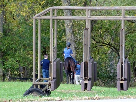Βερσαλλίες, Κεντάκι: Young horses training to be ridden.