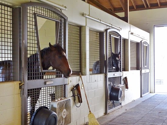Βερσαλλίες, Κεντάκι: Friendly Foals