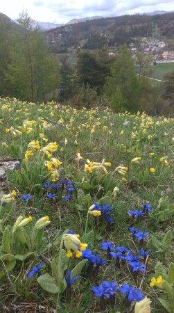 Thorame-Haute, Fransa: Fleurs de printemps