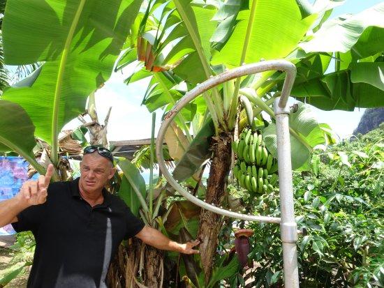 Papetoai, Fransk Polynesia: FranckyFranck explicando en el Tropical Garden
