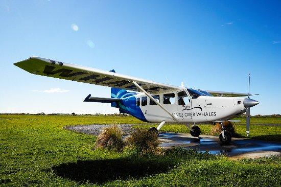 Wings Over Whales GA8 Airvan