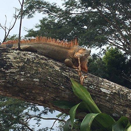 Cano Negro, Costa Rica: photo1.jpg