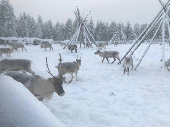 Luosto, Finland: IMG-4585_large.jpg