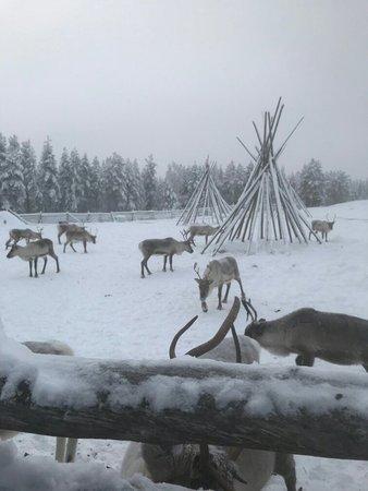 Luosto, Finland: IMG-4641_large.jpg