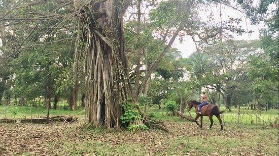 Esterillos Este, Kosta Rika: 🍂🍂That sound of hoofs and dry leafs 🐴