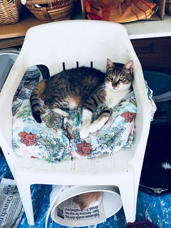 Tala, Кипр: Where do cats sit? Wherever they want to.