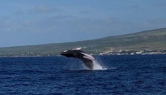 Maalaea, HI: Whale Watching