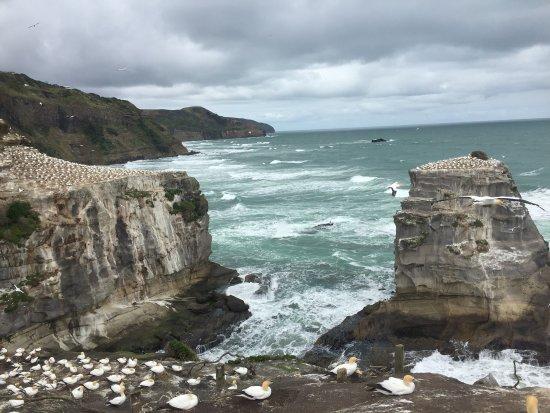 Waimauku, Nueva Zelanda: photo6.jpg