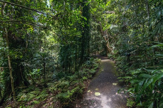 Dorrigo, Australia: the path