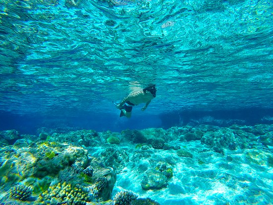 Niue: Swimming with Whales