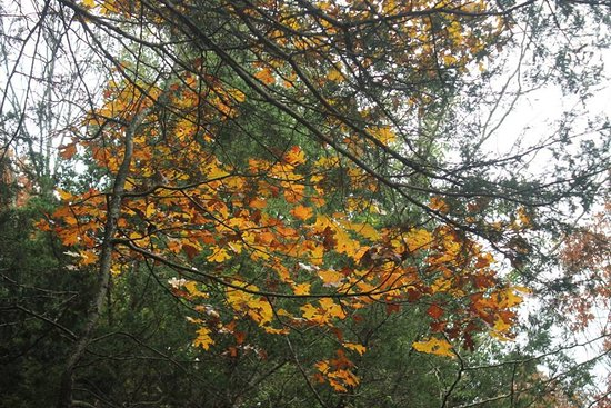 Jefferson City, MO: fall leaves