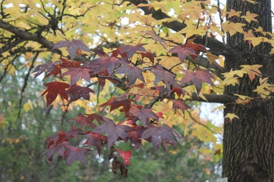 Jefferson City, MO: lovely autumn day