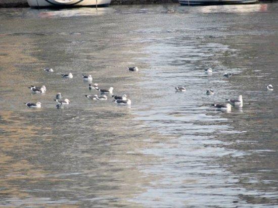 Puerto de Málaga : gulls