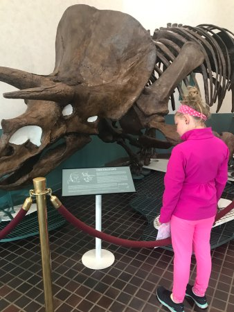 Rock Springs, WY: The dino hunt begins