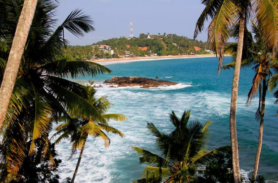 Private 8-Day Tour of Sri Lanka from...