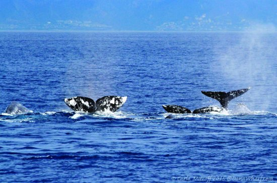 Private Whale and Dolphin Adventure...
