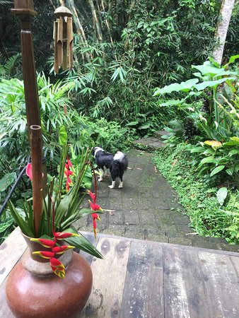 Sarinbuana Eco Lodge: this was one of the garden path that leads to the spa