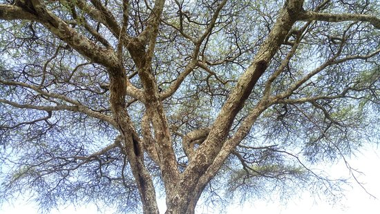 Arusha Region, Tanzania: P71205-094855_large.jpg