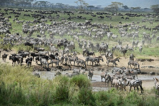 Arusha Region, Tanzania: IMG-20171207-WA0016_large.jpg
