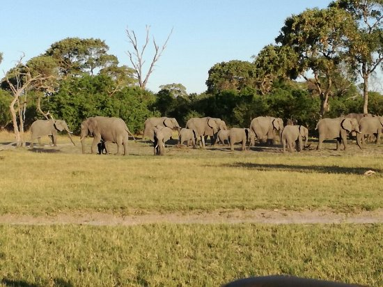 Maun, Botswana: Safari with Planet Wilderness
