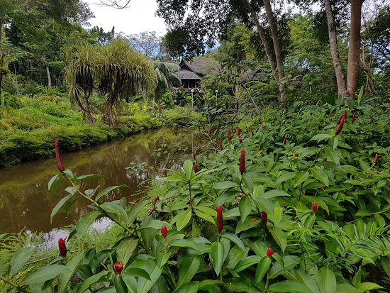 Sepilok, Malasia: 20171209_161503_large.jpg