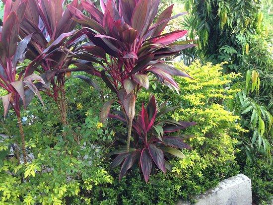 Tanauan City, Filippinene: GARDEN