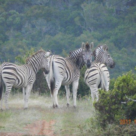 Kenton-on-Sea, Güney Afrika: photo4.jpg