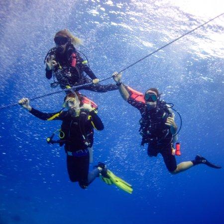 Thresher Shark Divers: photo1.jpg