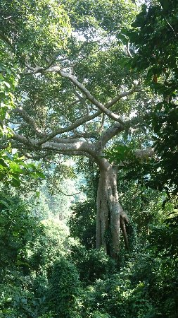 Kep, Camboya: DSC_5658_large.jpg