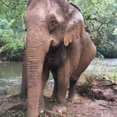 Sen Monorom, Cambodia: Super rencontre dans la jungle. Des éléphants très touchants. Il est tellement beau de les voir