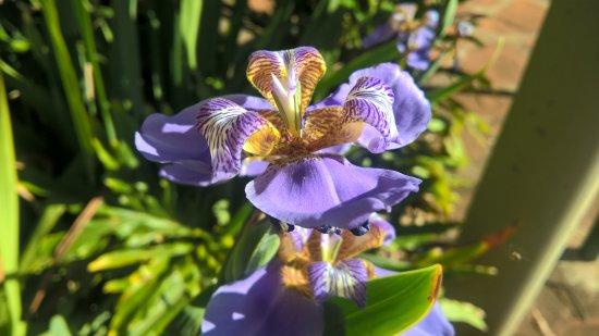 Brotas: Uma das flores do parque