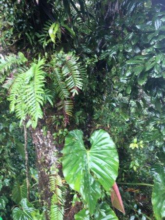 蒙特維多雲霧森林自然保護區張圖片