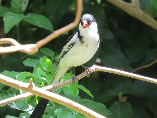 Fynbos Ridge Country House & Cottages: Plenty of birds