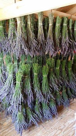 Greer, Caroline du Sud : Drying bundles