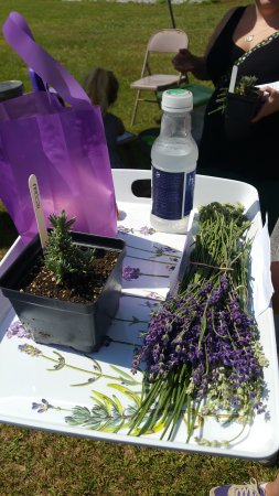 Greer, SC: Lavender products and more!