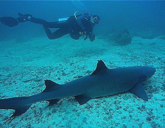 Santa Catalina, Panama: Espectacular el buceo en Coiba, full tiburones aleta punta blanca, morenas verdes y mucha divers