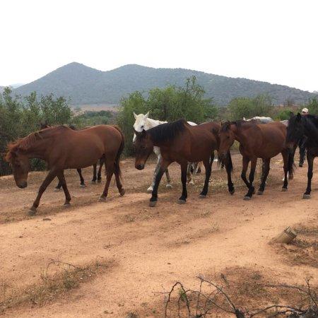 De Rust, Южная Африка: 2Doorn Equine