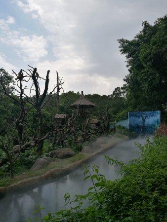 Chimelong Safari Park: Gibbon enclosure mist