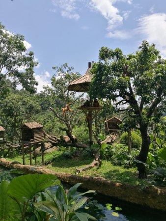 Chimelong Safari Park: Gibbon enclosure